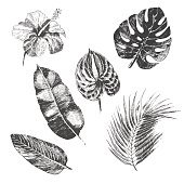 vector hand drawn tropical plants and exotic flower - palm