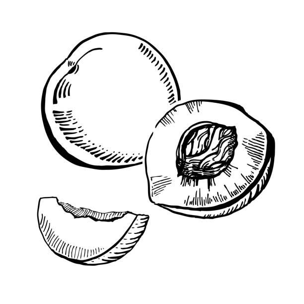 vektor-hand gezeichneten zwei schwarze und weiße tinte pfirsiche slice - nektarinenmarmelade stock-grafiken, -clipart, -cartoons und -symbole