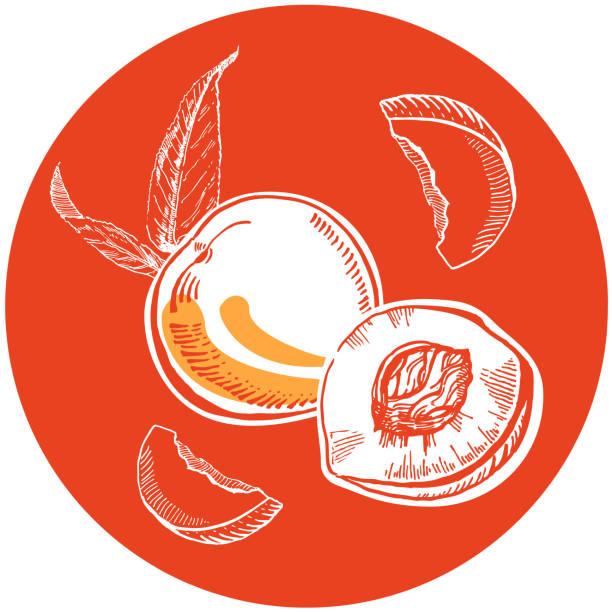 vektor handgezeichnete zwei weiße tinte pfirsiche mit blättern und scheiben in orange kreis - nektarinenmarmelade stock-grafiken, -clipart, -cartoons und -symbole