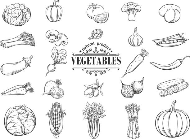 Vector hand drawn vegetables icons set. Decorative Vector hand drawn vegetables icons set. Decorative retro style collection farm product restaurant menu, market label. artichoke stock illustrations
