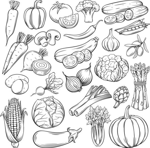 Vector hand drawn vegetables icons set Vector hand drawn vegetables icons set. Sketch style collection farm product restaurant menu, market label. garlic stock illustrations