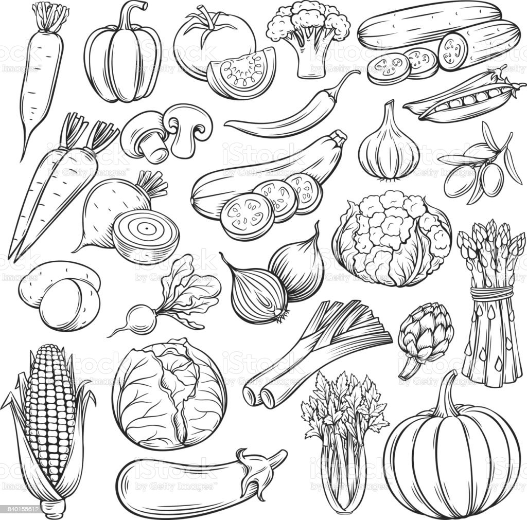 Vector hand drawn vegetables icons set vector art illustration