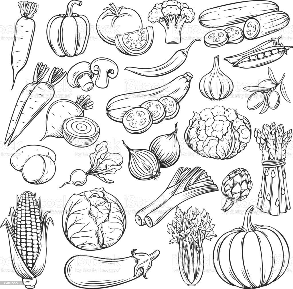 Vector set de iconos dibujados a mano verduras - ilustración de arte vectorial