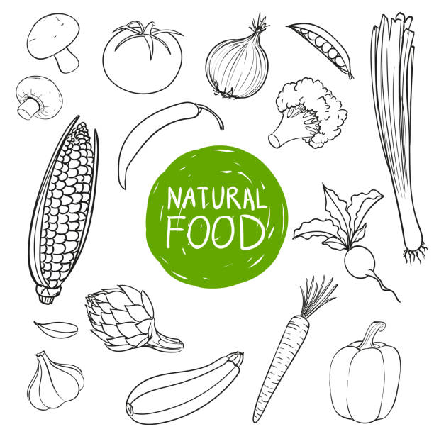 Vector Hand Drawn Vegetables vector art illustration