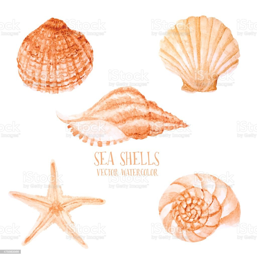 Vector hand drawn Watercolor sea shells.