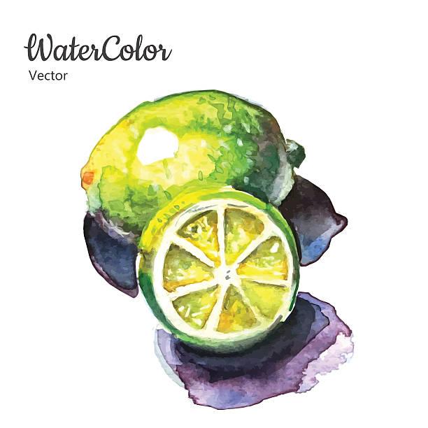 Vector hand painting abstract watercolor lemon illustration Vector hand painting abstract watercolor lemon illustration. Eps10 limoen stock illustrations