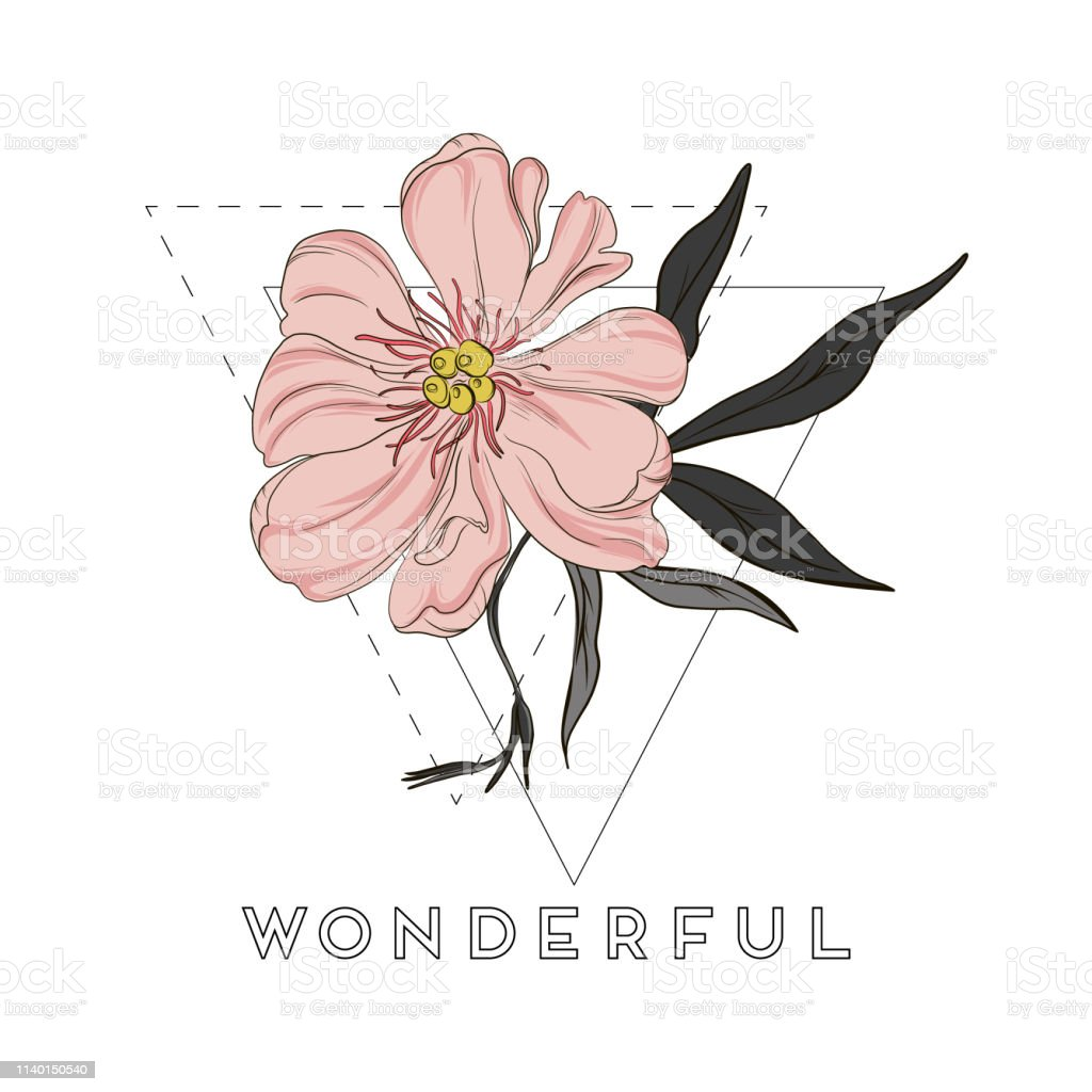Vector Handdrawn Peony Flowers Drawings Beautiful Abstract