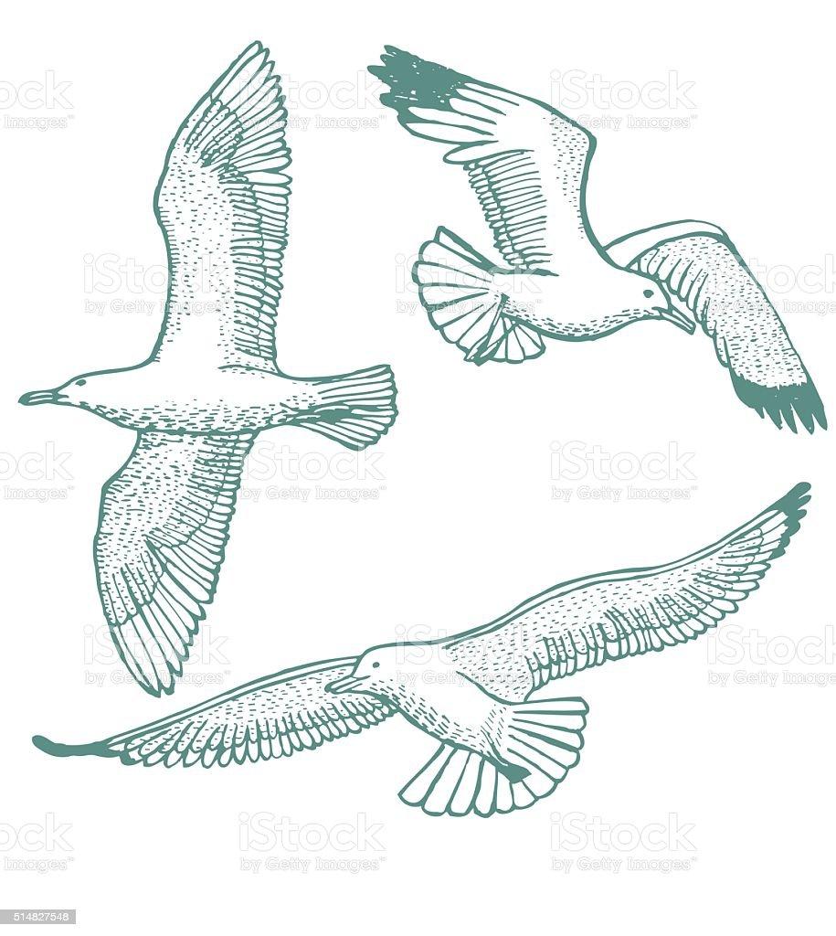 vector hand-drawn set of seagulls vector art illustration