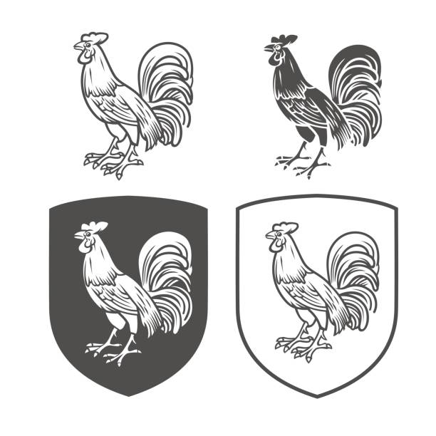 Vector heraldic shields with cock on a white background. Coat of arms, heraldry, emblem, symbol design elements. Black and white vector objects Dick stock illustrations