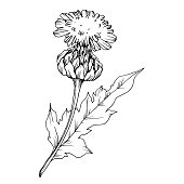 Vector Herbal branch plant botanical garden floral foliage. Black and white engraved ink art. Isolated herbal illustration element on white background.