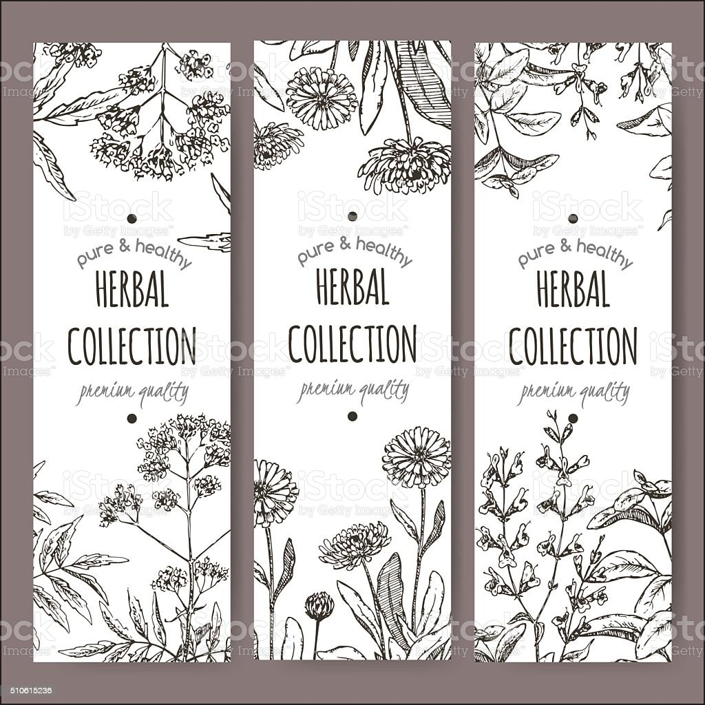 3 vector herbal tea labels with valerian, calendula and sage vector art illustration