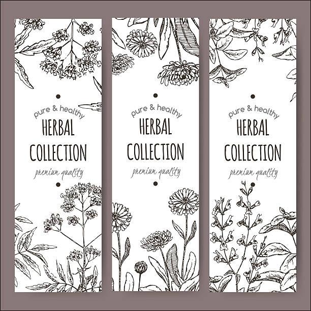 illustrazioni stock, clip art, cartoni animati e icone di tendenza di 3 vettoriale etichette di tè alle erbe con valeriana, calendula e salvia - camellia sinensis