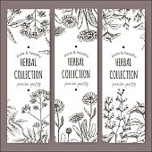 3 vector herbal tea labels with valerian, calendula and sage