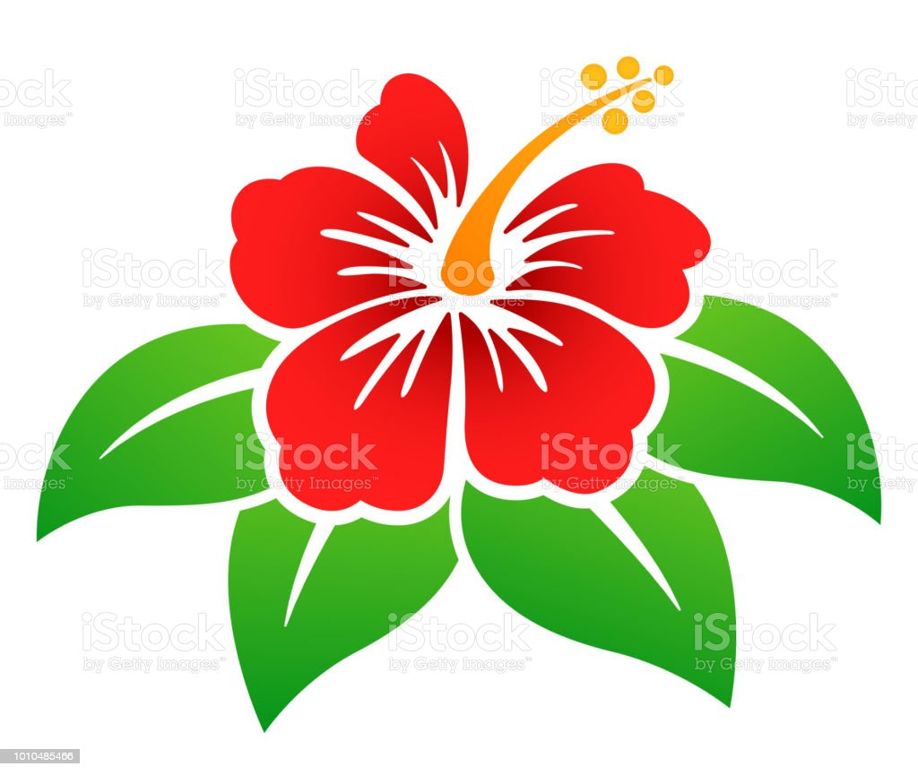 Vector Hibiscus Flower Colorful Design Stock Vector Art More