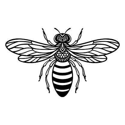 Vector honey bee. Insect silhouette. Template for paper cutting.