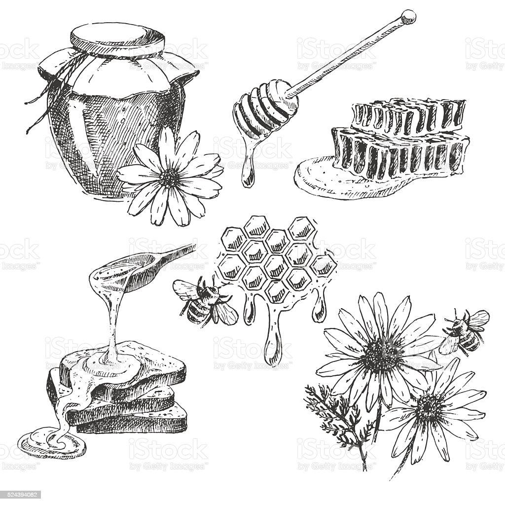 vector honey elements set. hand drawn jar, spoon, stick, cells vector art illustration
