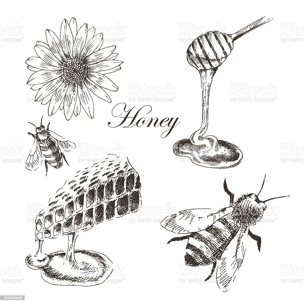 vector honey, honeycells, honeystick, bee illustration. detailed hand drawn sketch vector art illustration
