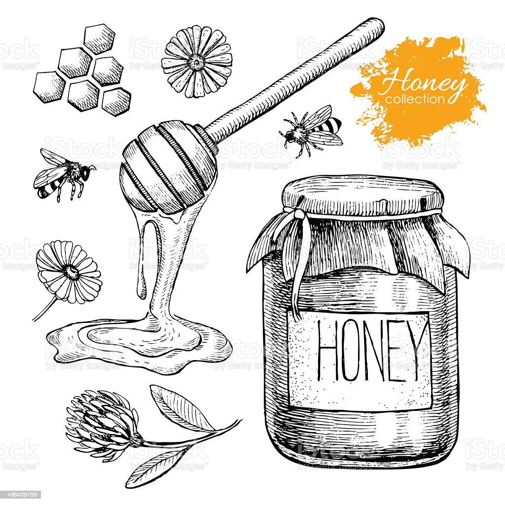 Vektor-Honig-set. Vintage hand gezeichnete Illustrationen – Vektorgrafik