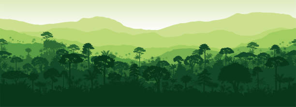 vector horizontal seamless tropical rainforest jungle forest background - jungle stock illustrations