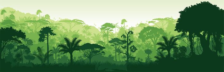 Vector horizontal tropical rainforest Jungle background