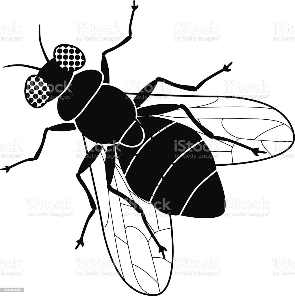Vector House Fly Top View In Black And White Stock Vector Art & More ...