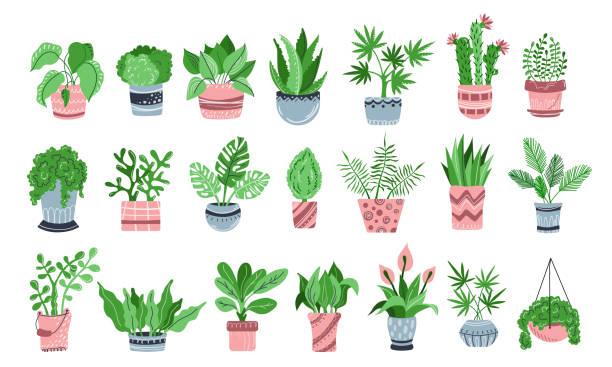 vector houseplants set - aloe vera stock illustrations