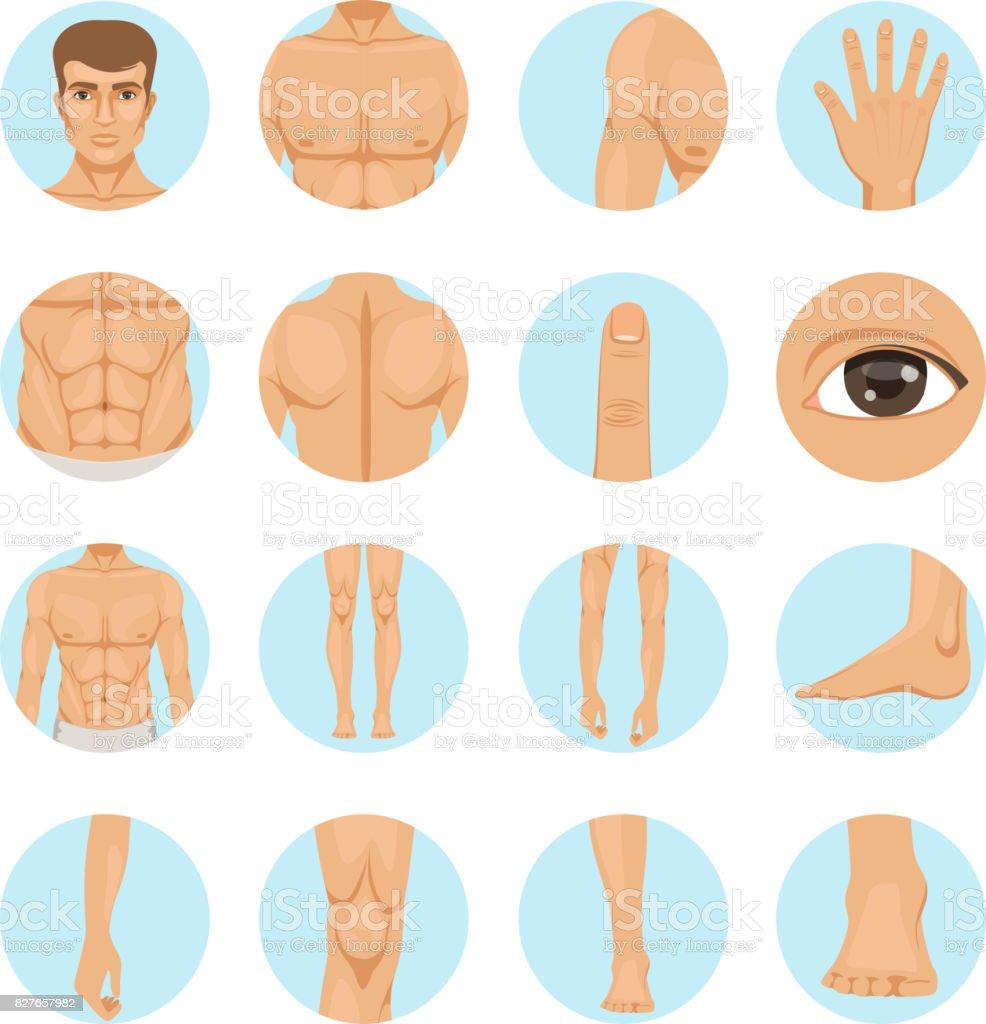 Vector human. Different parts of man body vector art illustration