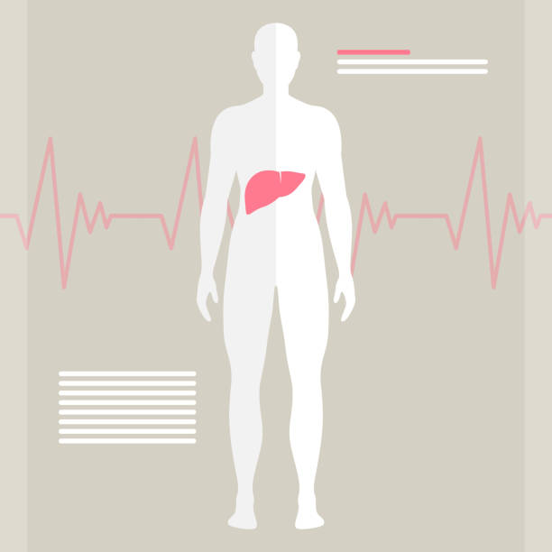Vector Human Liver vector art illustration
