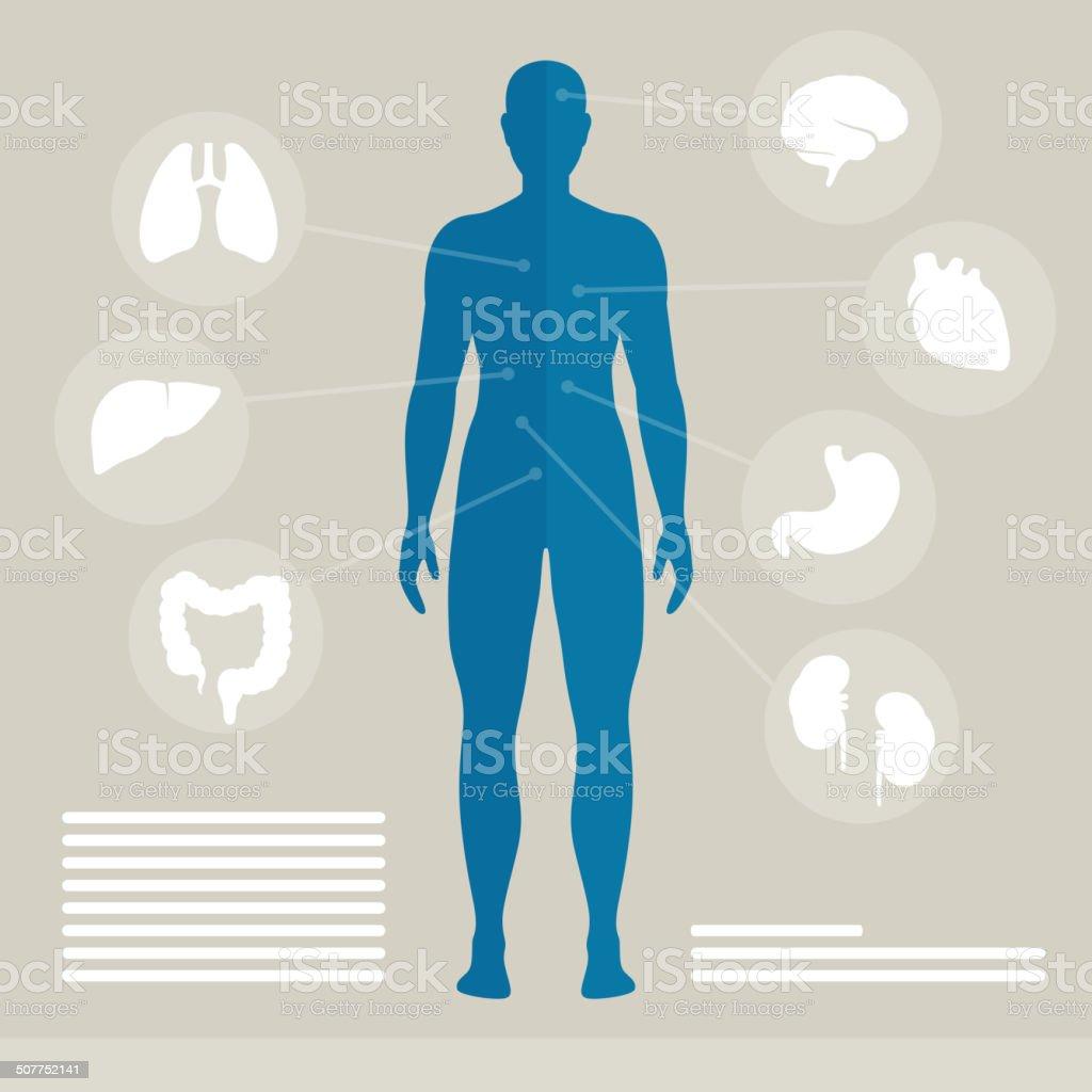 Vektor Menschlichen Organen Stock Vektor Art und mehr Bilder von ...