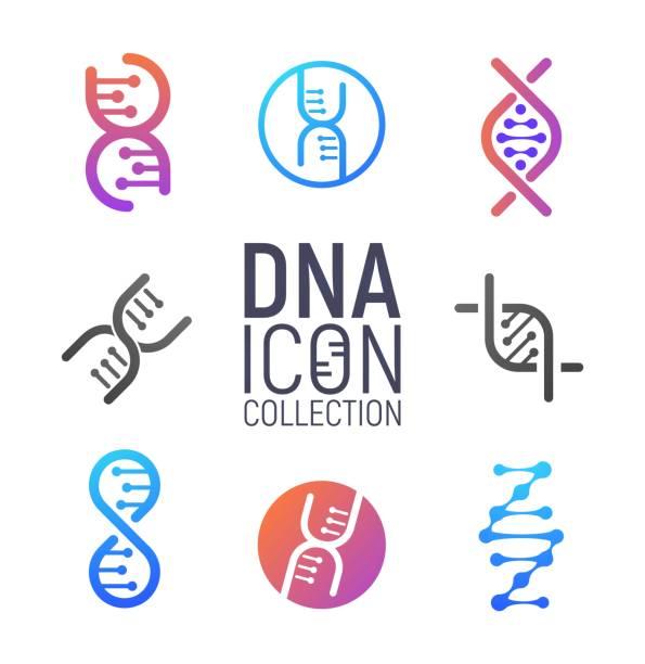 ilustraciones, imágenes clip art, dibujos animados e iconos de stock de colección de logotipos de vectores de adn aislado. conjunto de logotipos de ácido desoxirribonucleico. modernos iconos microbiológicos simples sobre fondo blanco - adn