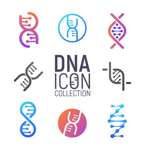 dna vector icon collection isolated. deoxyribonucleic acid set. modern simple microbiological icons on white background - дезоксирибонуклеиновая кислота stock illustrations