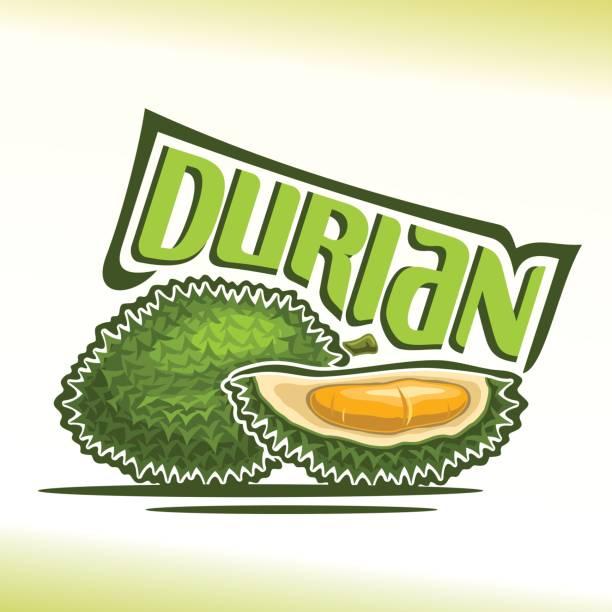 vektor icon durian frucht - spitzenkernstück stock-grafiken, -clipart, -cartoons und -symbole