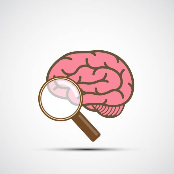 bildbanksillustrationer, clip art samt tecknat material och ikoner med vector ikonen mänskliga hjärnan och förstoringsglas - brain magnifying