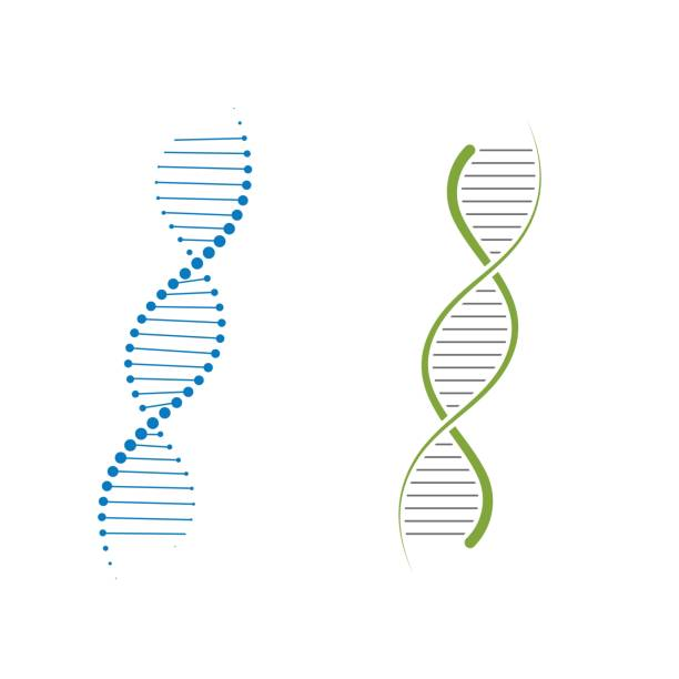 DNA vector icon illustration design DNA vector icon illustration design template dna test stock illustrations