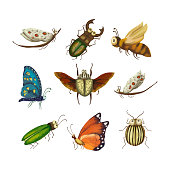 Vector Icon set with cute 3d insect. Illustration with a garden cartoon beetles on a white background. Nature collection.