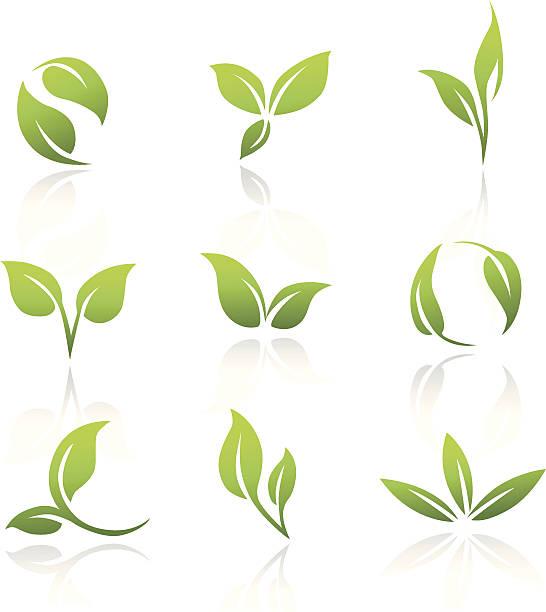 bildbanksillustrationer, clip art samt tecknat material och ikoner med vector icons - green leaves - product image