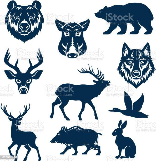 Vector icons of wild animals and birds for hunting vector id826985136?b=1&k=6&m=826985136&s=612x612&h=0yokzrjhdliw3stdhtjlpjzzmmfx5ejvst8yqb6hr3w=