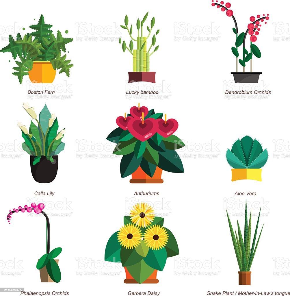Vecteur Schema De Maison Plante En Pot De Fleurs A Linterieur Et