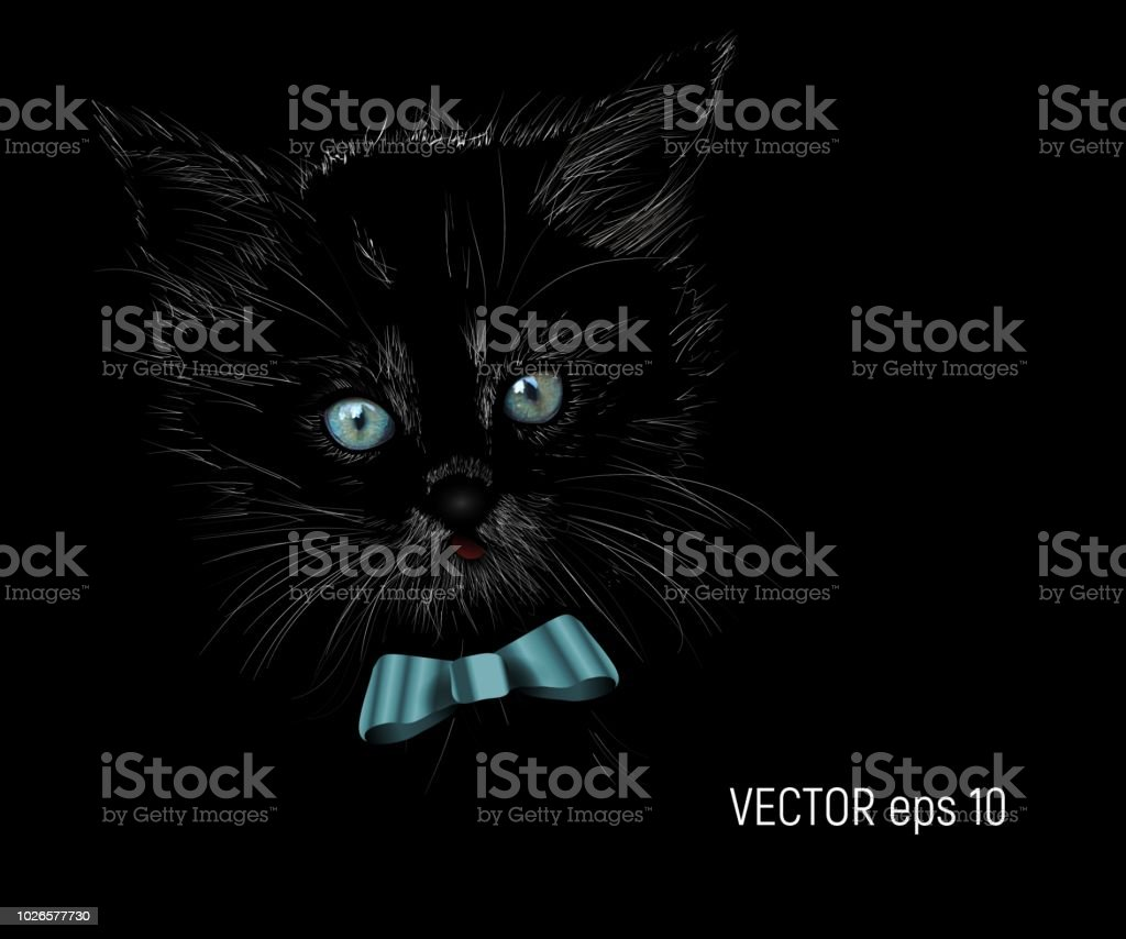 Vector Illustrated Portrait of Cat on black background