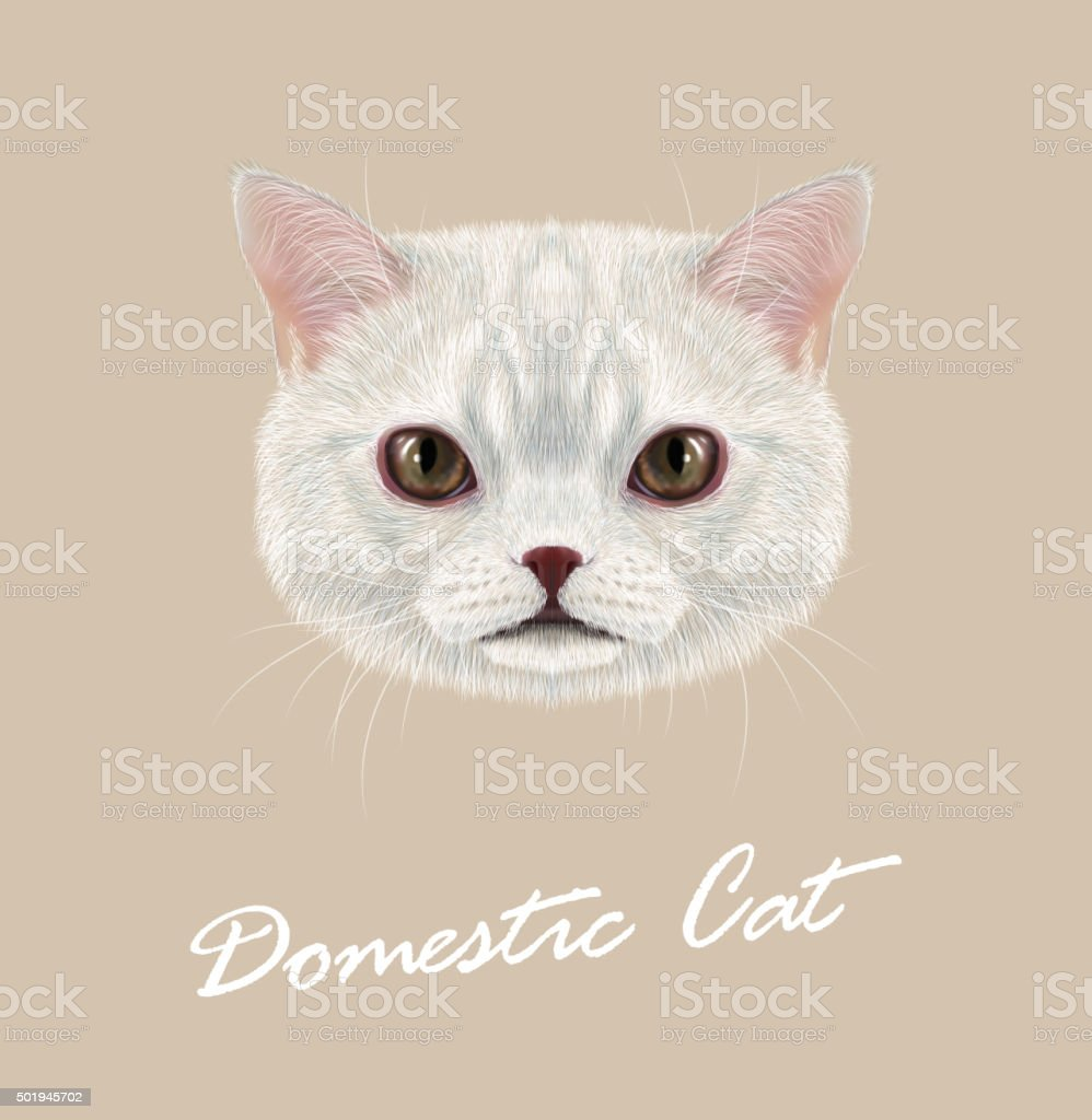 Cute face of white cat with delicate grey stripes