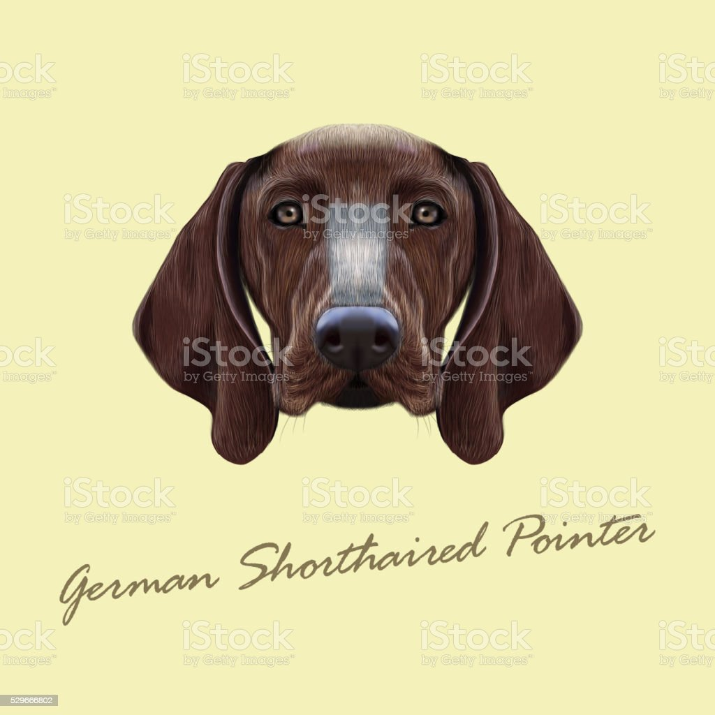 Vector Illustrated Portrait Of German Shorthaired Pointer Dog Stock ...