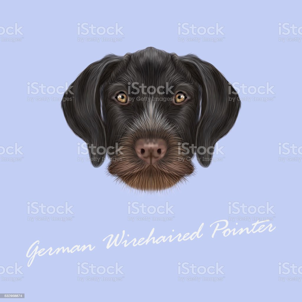 Vector Illustrated Portrait Of German Wirehaired Pointer Dog Stock ...