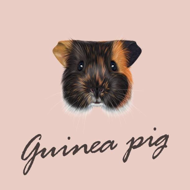 vektor illustrierte porträt von guinea schwein. - hamsterhaus stock-grafiken, -clipart, -cartoons und -symbole