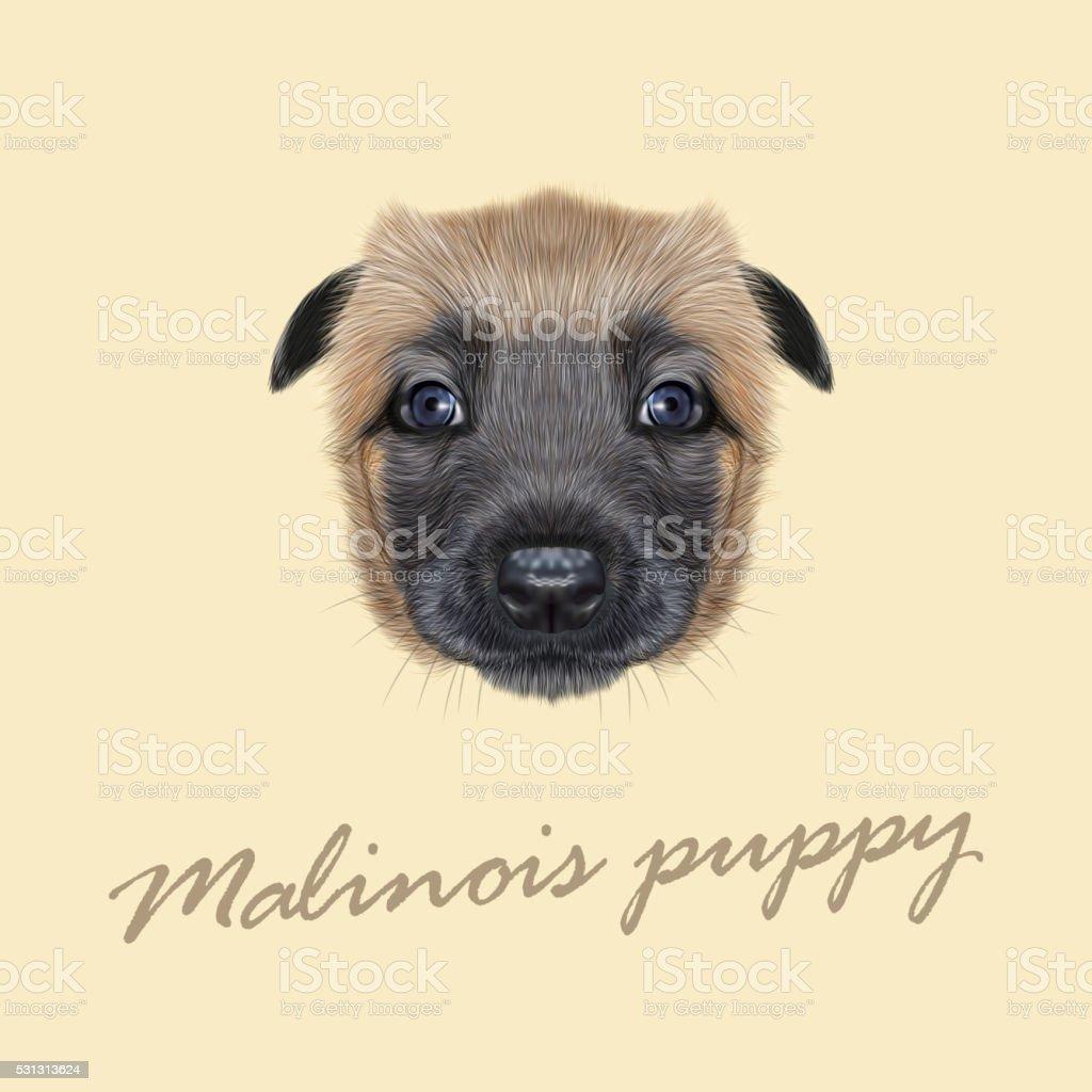 Vector Illustrated Portrait of Malinois dog. vector art illustration