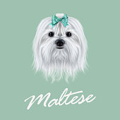 Cute white fluffy face of domestic dog on green background.