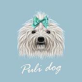 Vector Illustrated Portrait of Puli dog.