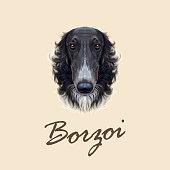 Vector Illustrated portrait of Russian Borzoi dog.