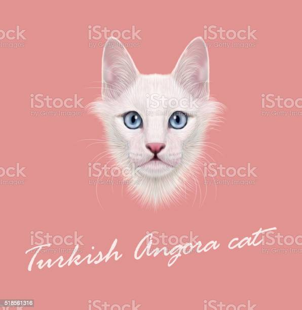 Vector illustrated portrait of turkish angora cat vector id518561316?b=1&k=6&m=518561316&s=612x612&h=7q7anrxbvoj3r p5mf3e2wt ayql9p  0qvsnokqeqi=