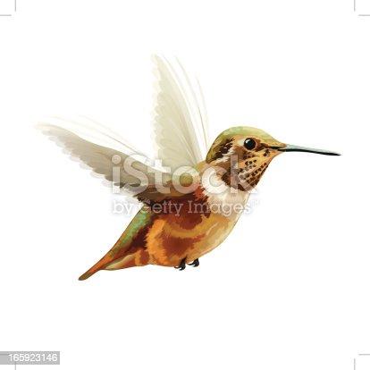 istock Vector Illustration: Anna's Hummingbird 165923146