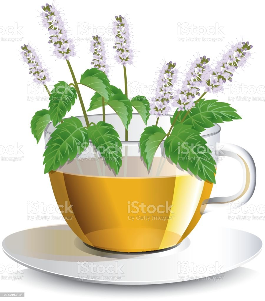 Vector illustration aromatic mint  tea in a transparent cup with flowers, a conceptual idea for the label vector art illustration